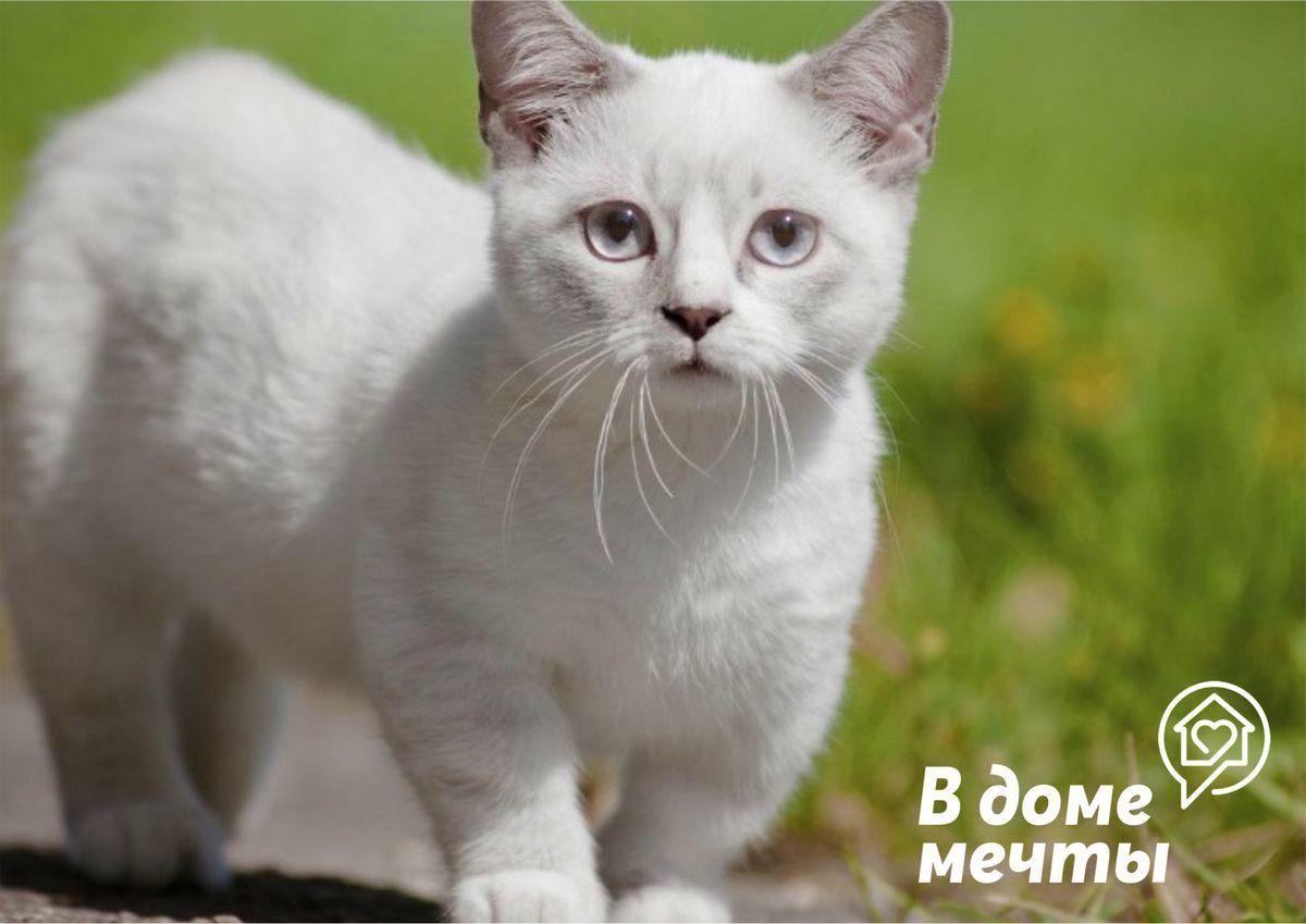 Топ-8 пород маленьких кошек для домашнего содержания