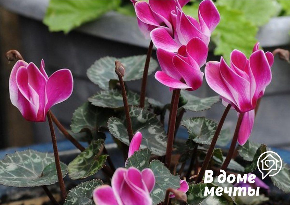 Топ-6 цветов, которые притягивают счастье в семью