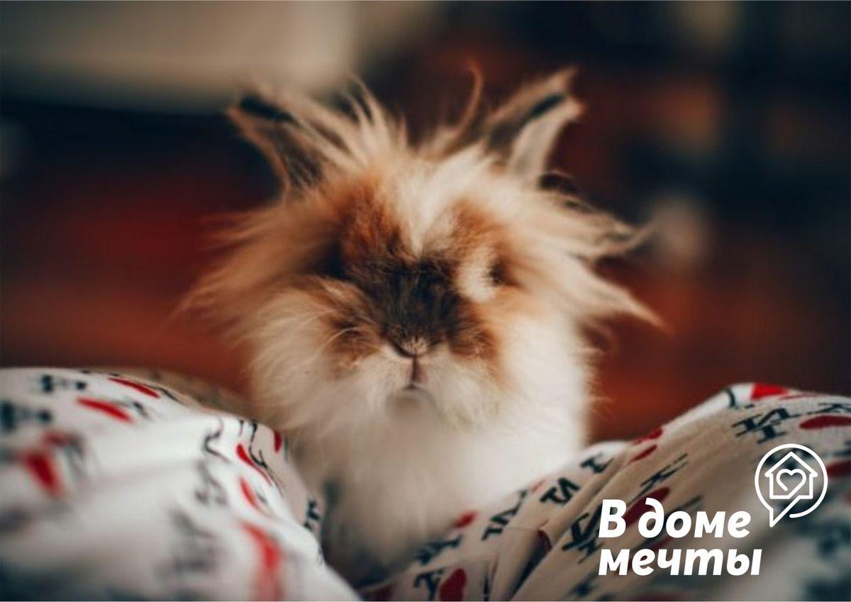 Уход за шерстью кролика: основные нюансы