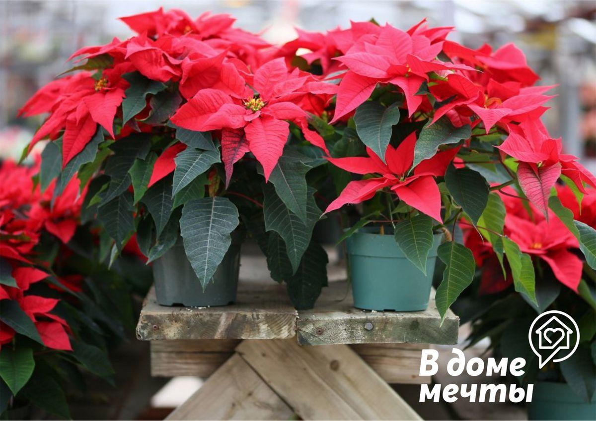 Топ-6 домашних растений, которые цветут зимой