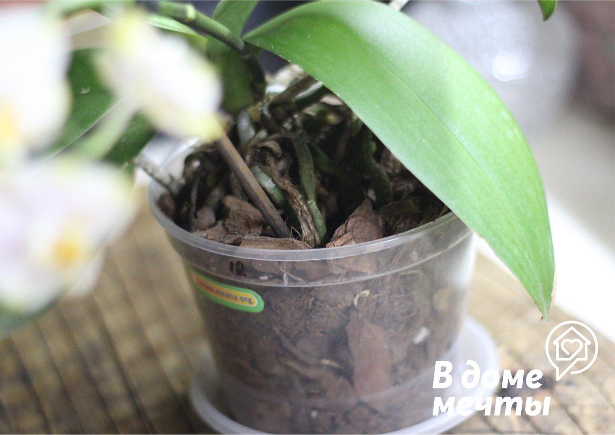 Когда орхидеи нужна пересадка