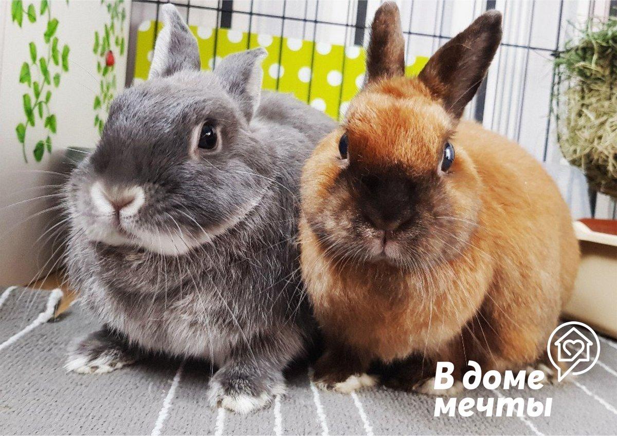 Решились завести домашнего кролика? Обратите внимание на эти важные нюансы!