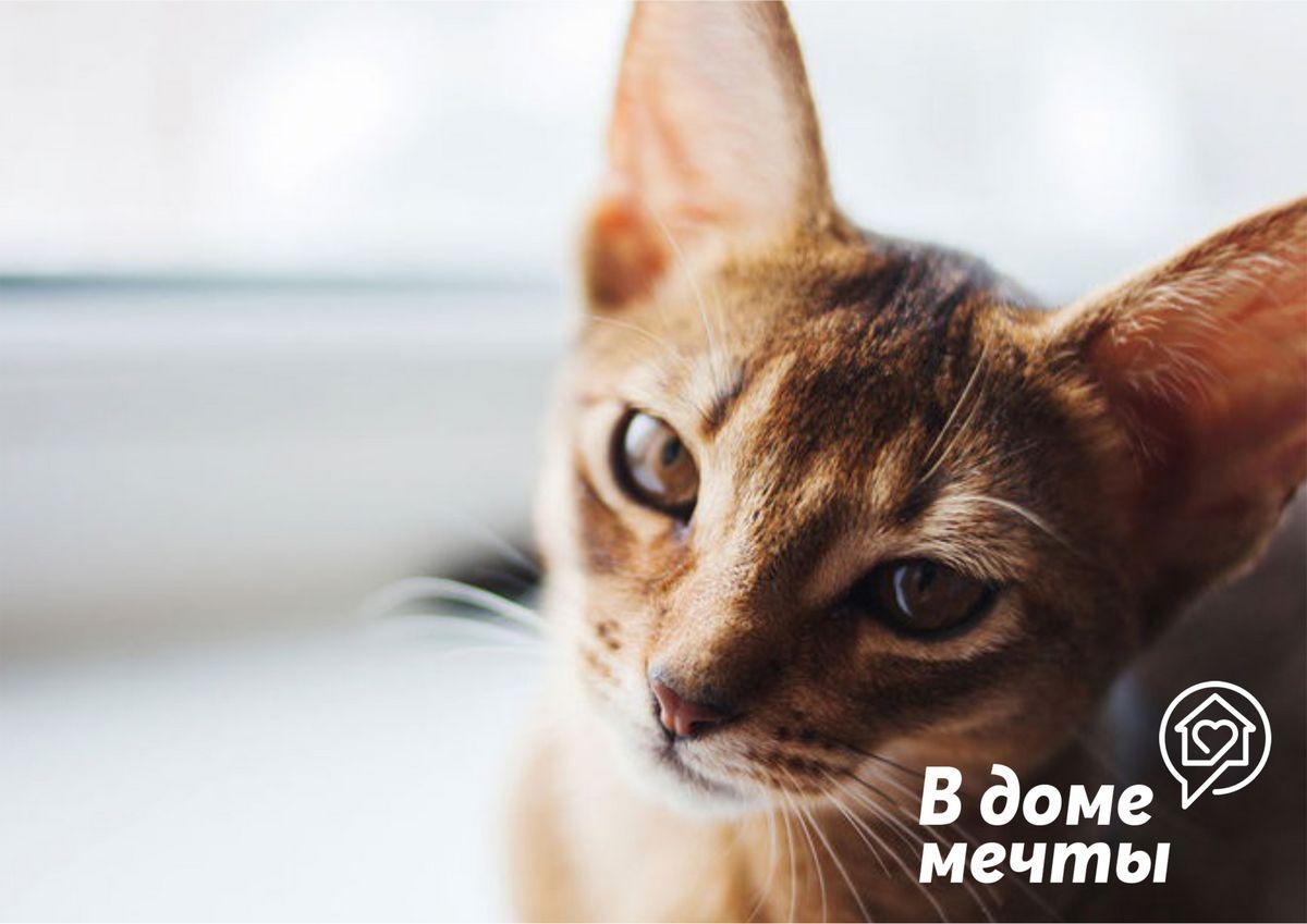 Как выбрать домашнее животное: пять важных советов