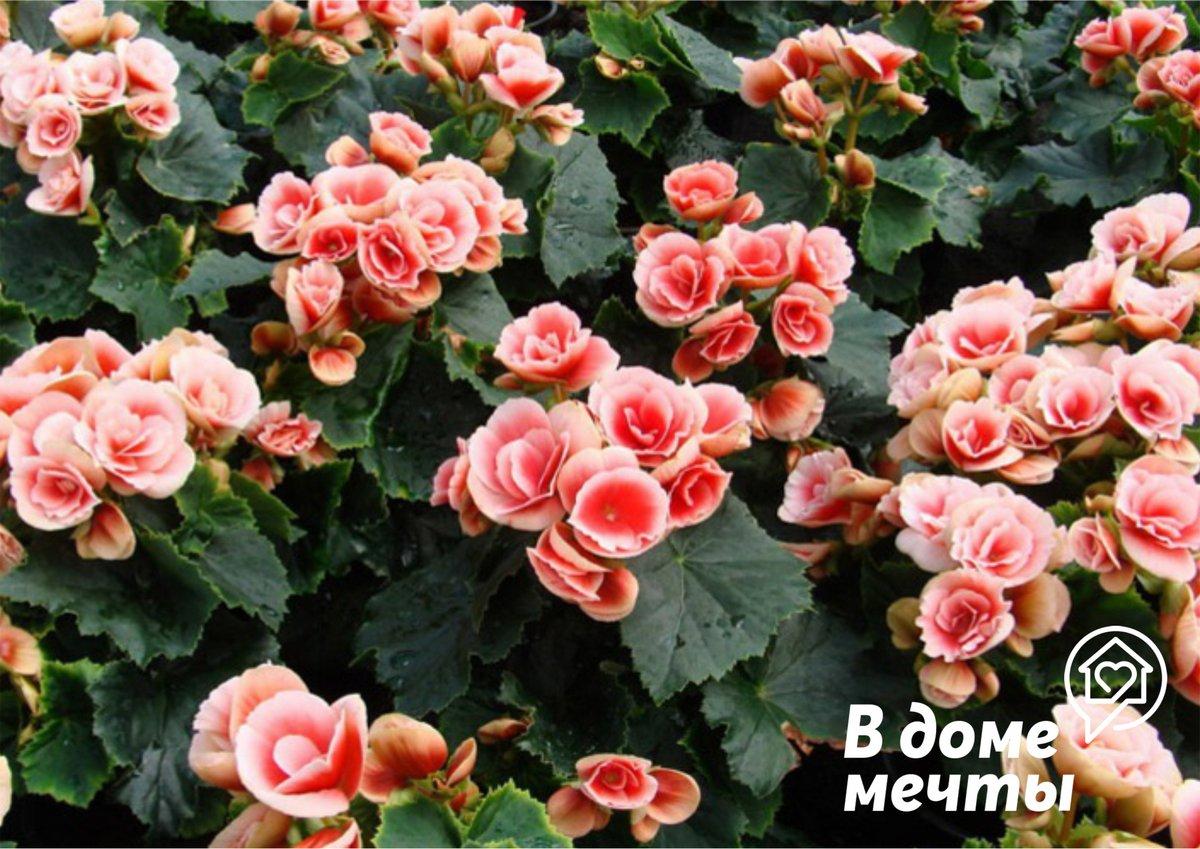 Восемь самых простых в уходе комнатных растений, которым будет рад каждый начинающий цветовод!