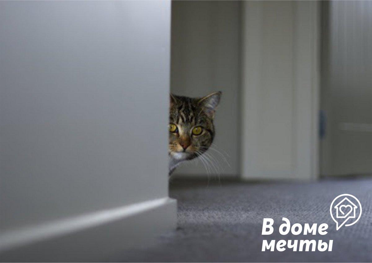 Топ-5 причин, почему кот все время прячется