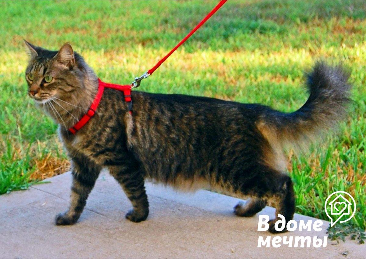Никогда не выгуливайте кота на улице! Почему опасно гулять с кошкой на шлейке