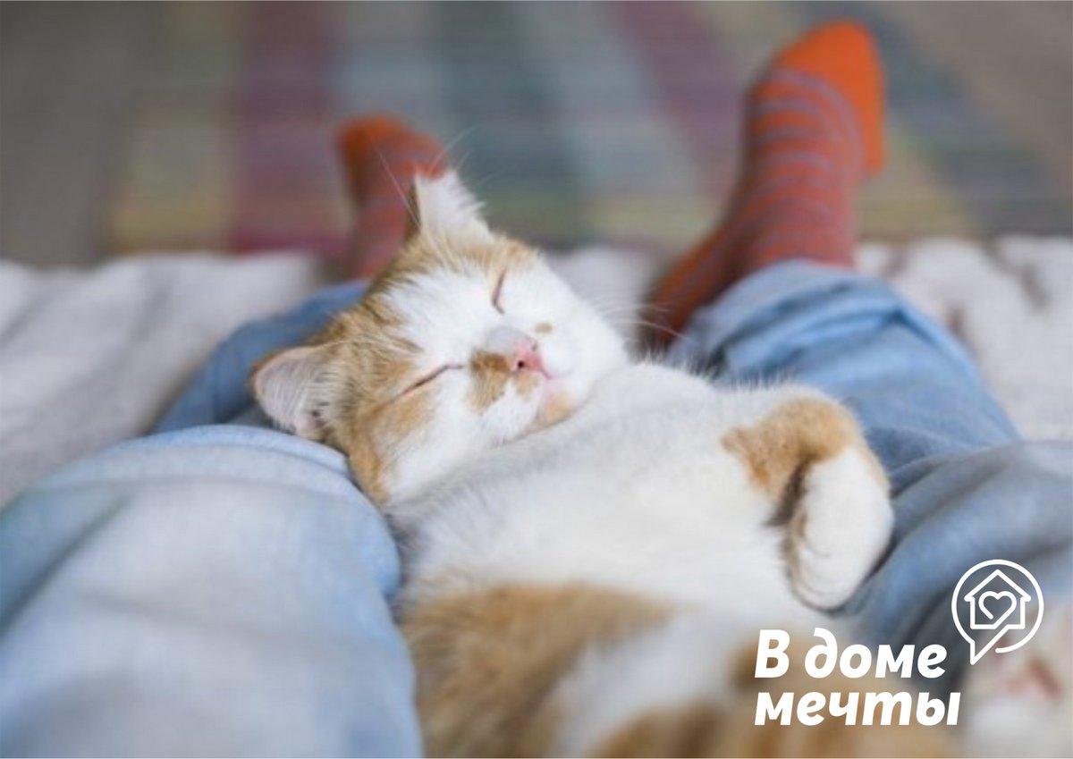 Почему кошка любит спать вместе с хозяином