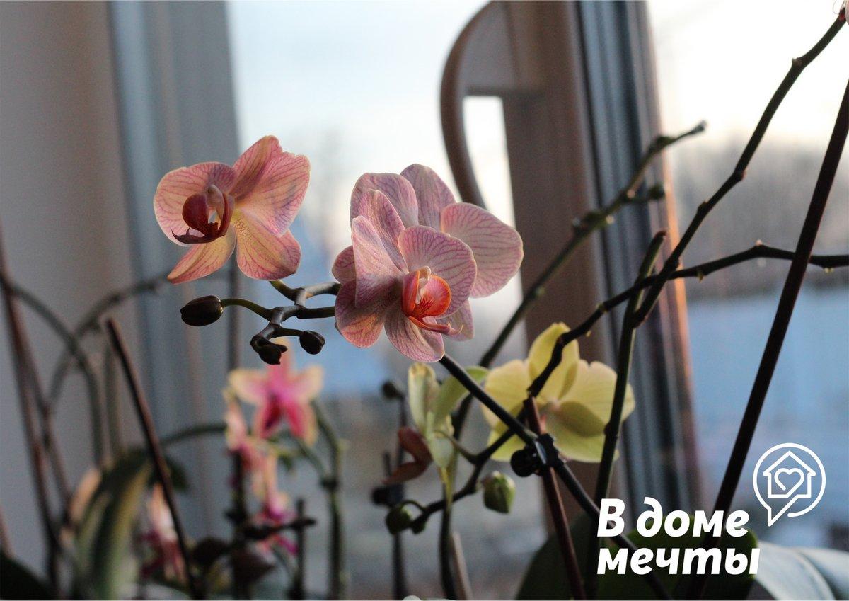 ●Орхидея. Это неприхотливое тропическое растение нуждается в редком и правильном поливе