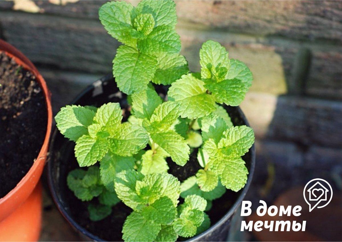 Чтобы навсегда избавиться от стресса, поставьте на рабочий стол эти комнатные растения!