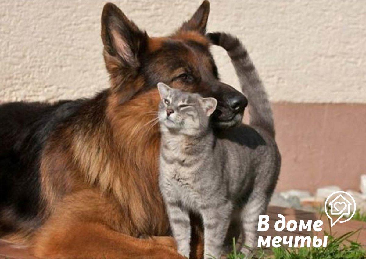 Как подружить кота и собаку при первом знакомстве