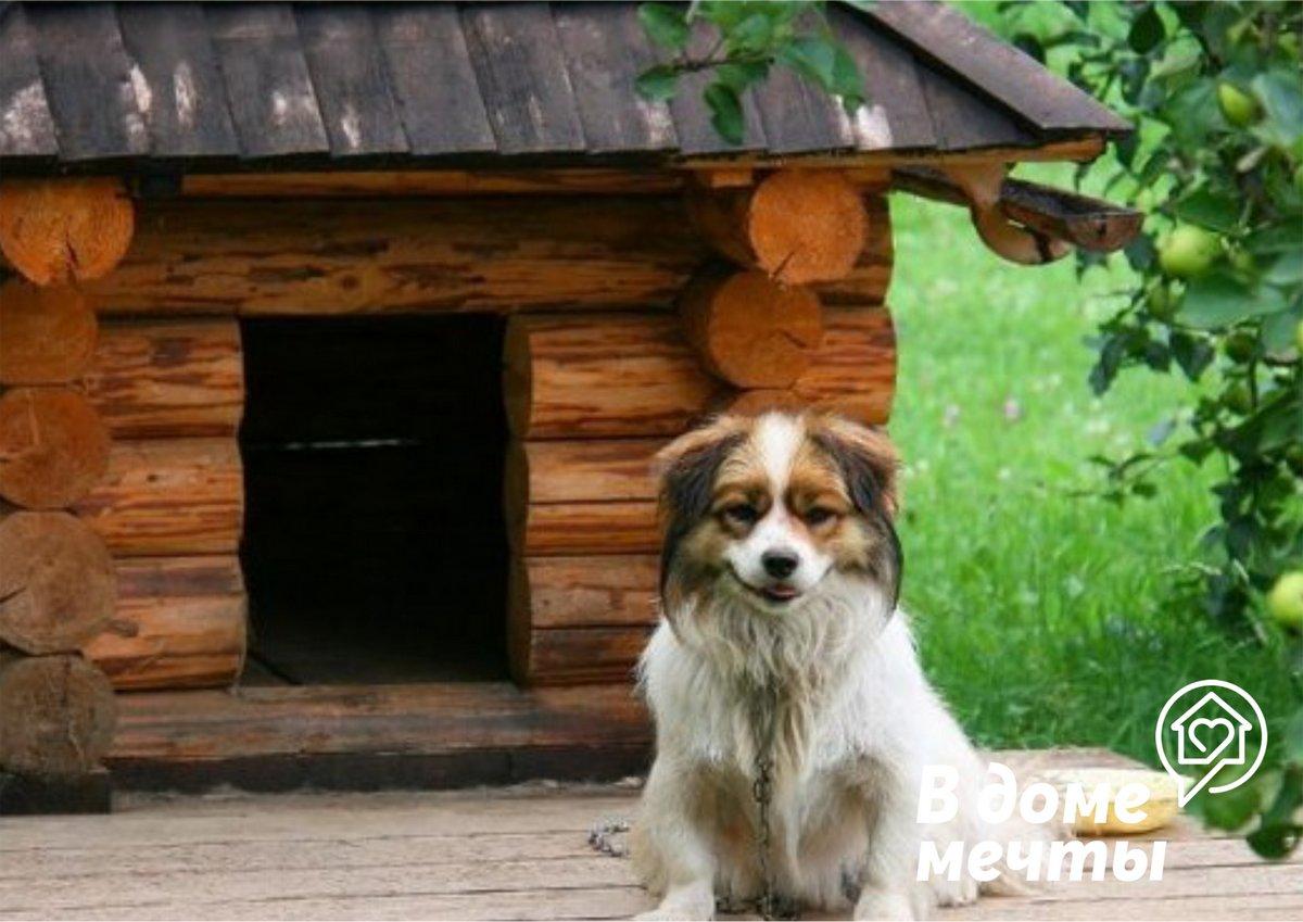 Животные на даче: как защитить домашнего питомца во время отдыха на природе