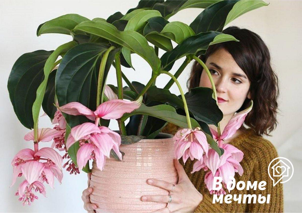 Почему не цветут комнатные растения: топ-8 причин