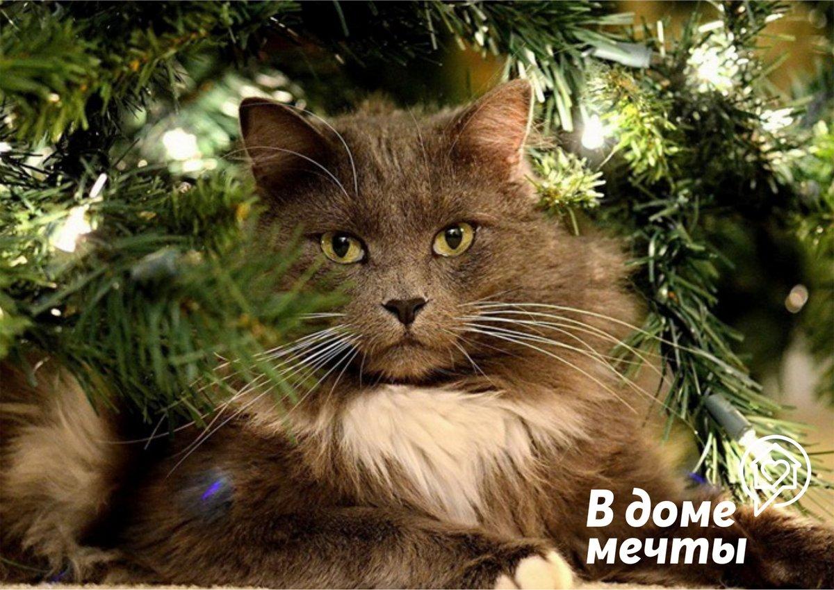 Опасность в доме - какой праздничный декор неуместен в доме с домашними животными