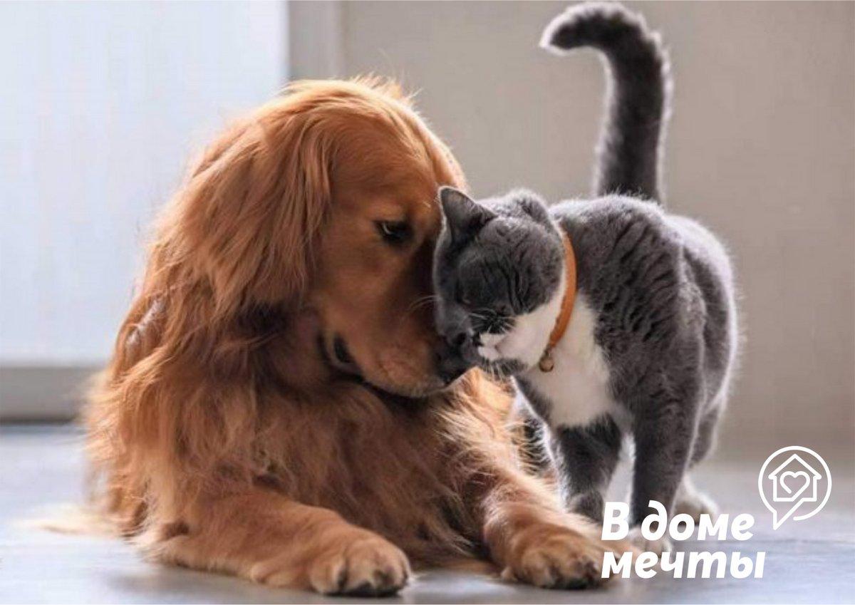 Как подружить собаку и кошку? Начать с правильного знакомства!