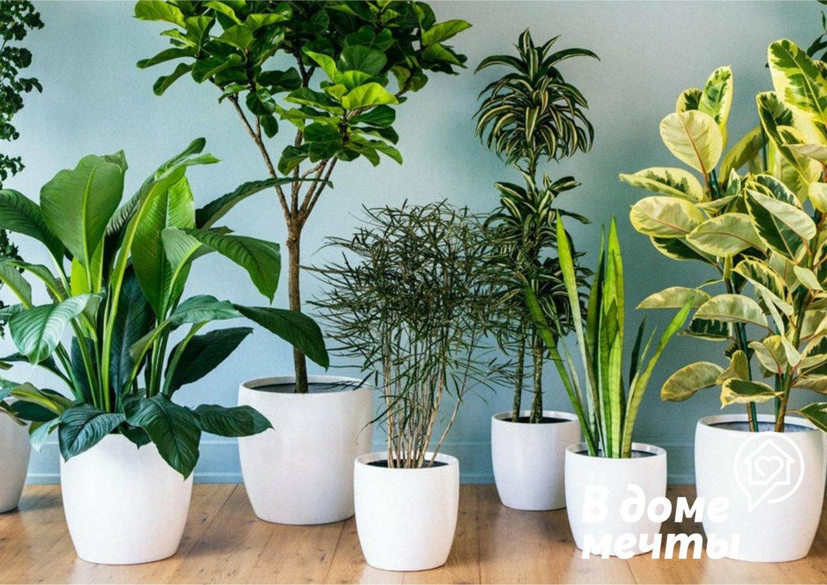 Комнатные растения не цветут? Возможно, вы совершаете эти серьезные ошибки в уходе за домашними цветами!