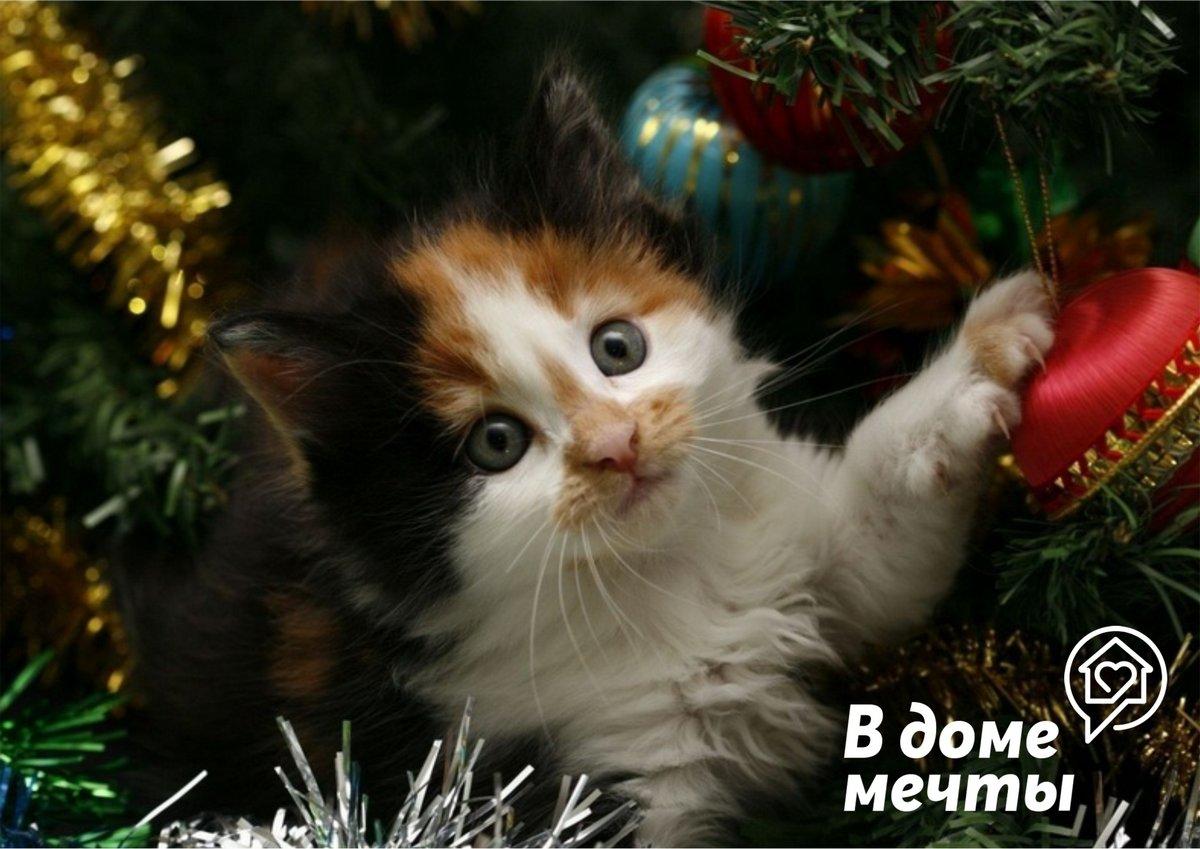Животные и праздничный декор - о чем нужно знать всем владельцам собак и кошек